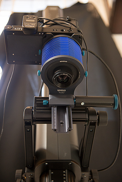 The Alpa 12 FPS technical camera with a Rodenstock Apo-Rodagon-D lens mounted on the front of a Novoflex Balpro 1 Universal Bellows. This setup allows us to capture very small objects including natural science specimens such as flies or small shells